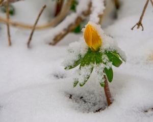 Flowers-snow1-6281